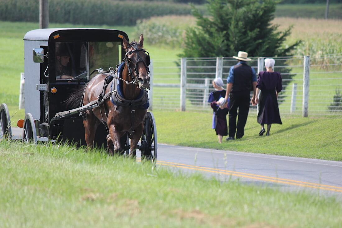 Hevosen vetämät Amish kärryt