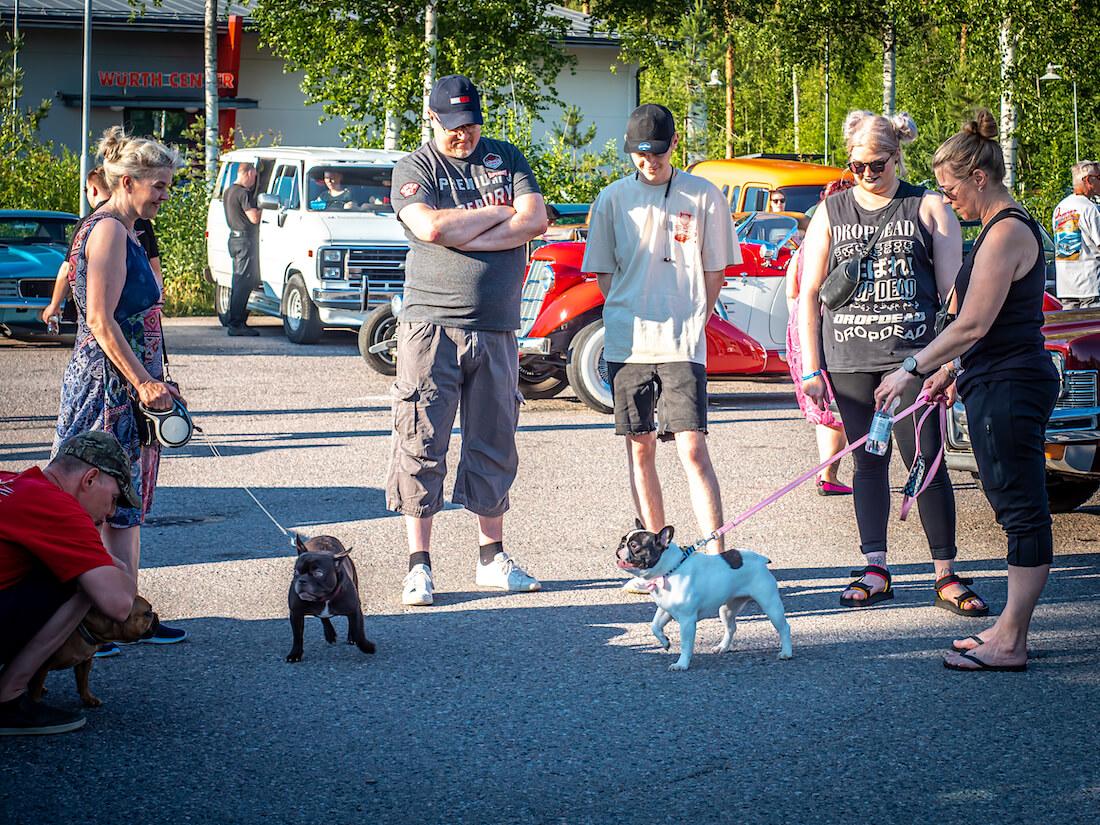 Koiria jenkkiautotapahtumassa